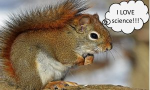 2017 science HSquirrel