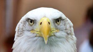 4 Eagle