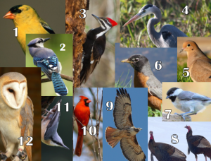 4 can you name these birds